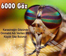 FB_IMG_1482009440127_270_230.jpg